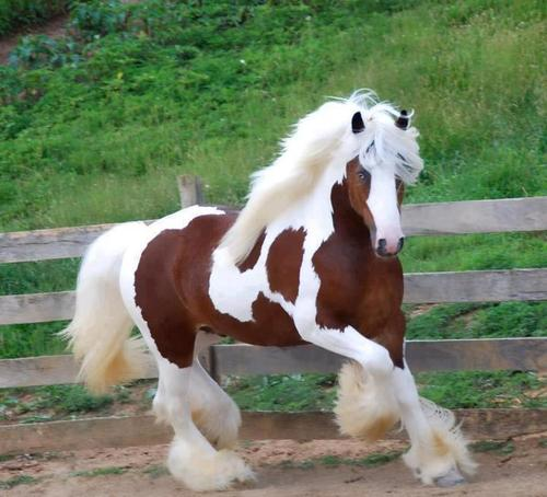 Top 10 Cutest Pets You Should Keep, Horses