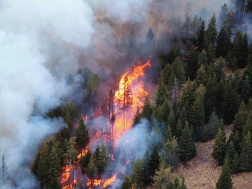 Top 10 Worst Wildfires In The History