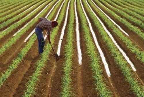 Top 10 Worst Jobs In The World, Farmer