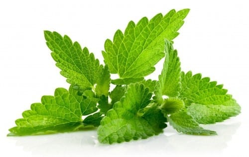 Best Home Remedies For Acne And Pimples - Use Mint Leaves