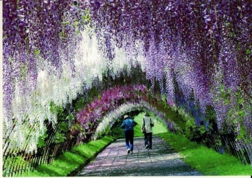 tOP 10 STUNNING PLACES -  Wisteria tunnel, Japan