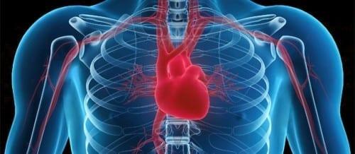 Health Benefits Of Eating Oranges - Cardiovascular Health