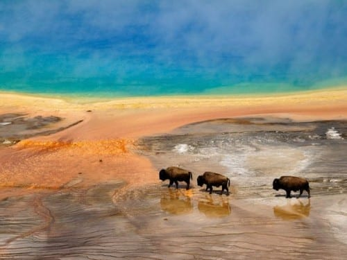 Most Beautiful Places To Visit In America - Yellowstone National Park