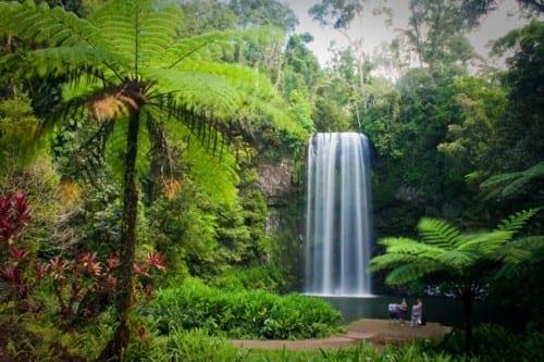 Daintree Rainforest - most fascinating wonders of Australia