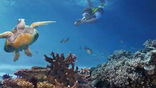 Great Barrier Reef - Wonders Of Australia