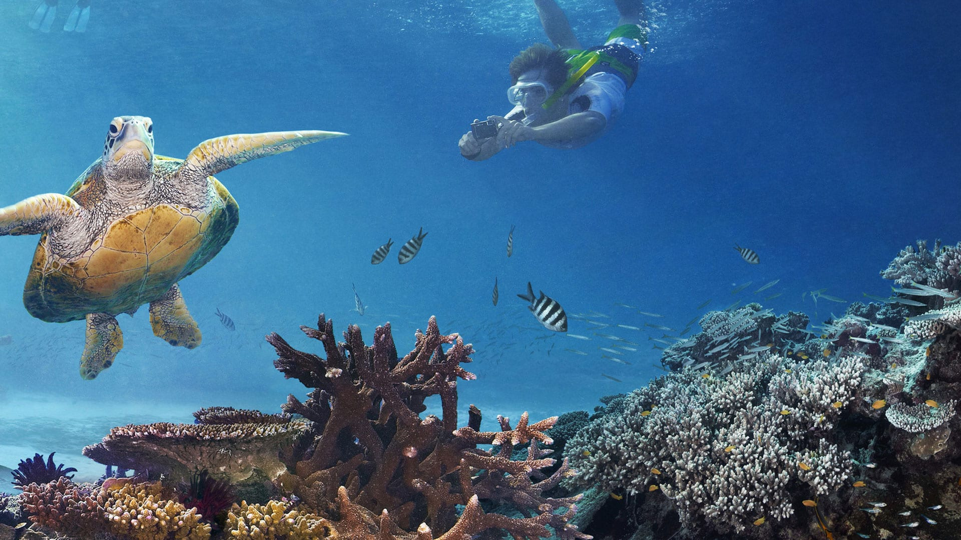 Great Barrier Reef - Wonders Of Australia