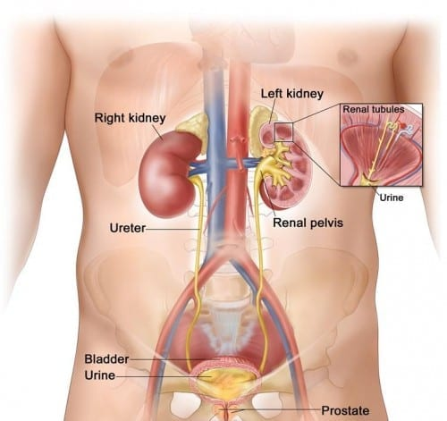 Renal Cancer - most common cancer in USA