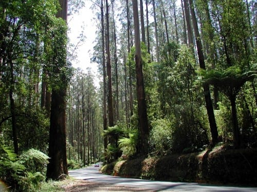 Honeymoon Destinations In Australia - Marysville (Victoria)