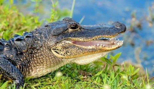 Everglades National Park, USA