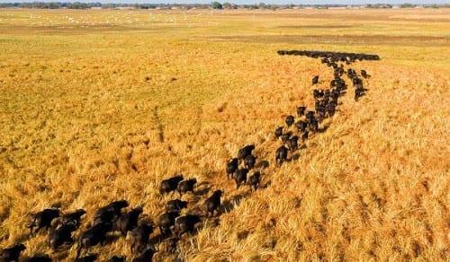 Kafue National Park, Zambia