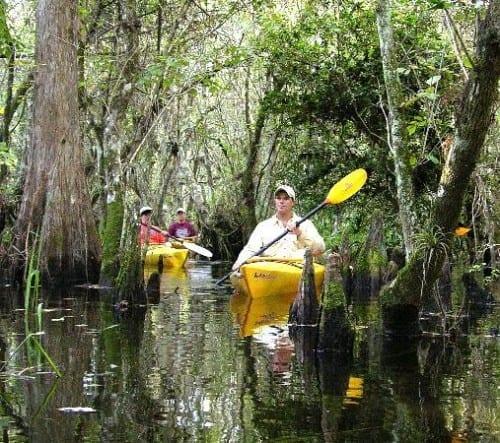 Most Amazing Places In Florida - 3. Everglades