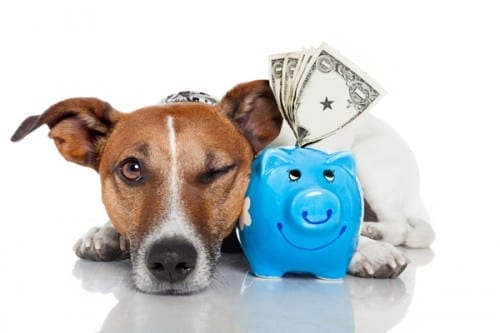 Most Expensive Addictions -  Purchasing Pets