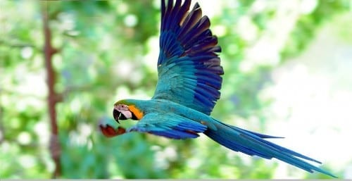 Most Beautiful Things In The World - The Resplendent Quetzal