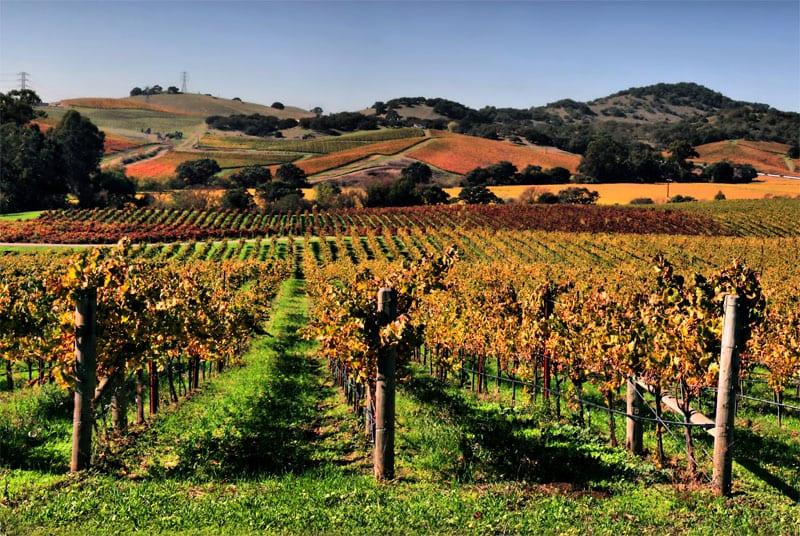 Napa Valley, California